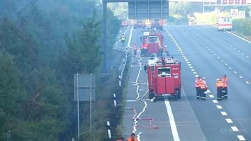 Ogień strawił ok. 50 hektarów lasu sosnowego. Pożar obok autostrady w Brandenburgii