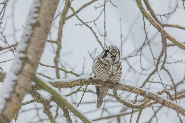 Sensacja ornitologiczna w Polsce. Na razie ignoruje ciekawskich