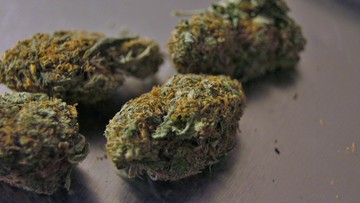 Marihuana w wyrobach medycznych będzie legalna w Portugalii. Parlament przyjął ustawę