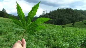 Kanada zezwala chorym na hodowlę marihuany