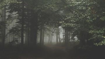 """""""Usiłował wciągnąć kobietę w głąb lasu"""". W Warszawie pijani mężczyźni napadli na studentki"""
