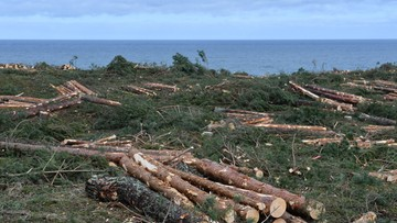 Ekolodzy wzywają Komisję Europejską do interwencji ws. przekopu Mierzei. KE zapowiada rozmowy