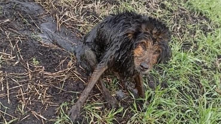 """Policjanci uratowali psa. """"Zwierzę nie miało siły wydostać się z gęstego błota"""""""