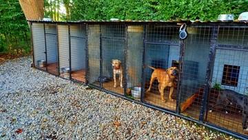 41-latek organizował walki psów. Zwierzęta miały obrażenia i blizny