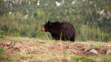 WWF bije na alarm: do 2020 r. populacja dzikich zwierząt spadnie o 67 proc.