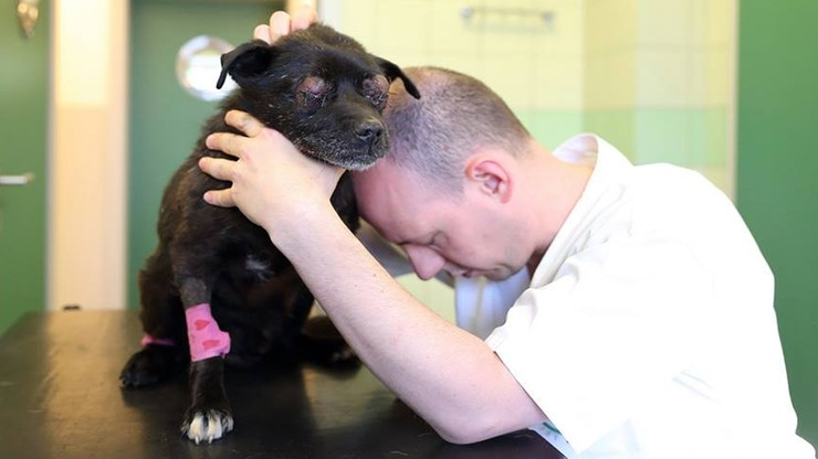 """""""Oczy wypadły z oczodołów"""", """"zmiażdżone płuca, wątroba w rozsypce"""". Skatowany pies - weterynarze walczą o jego życie"""