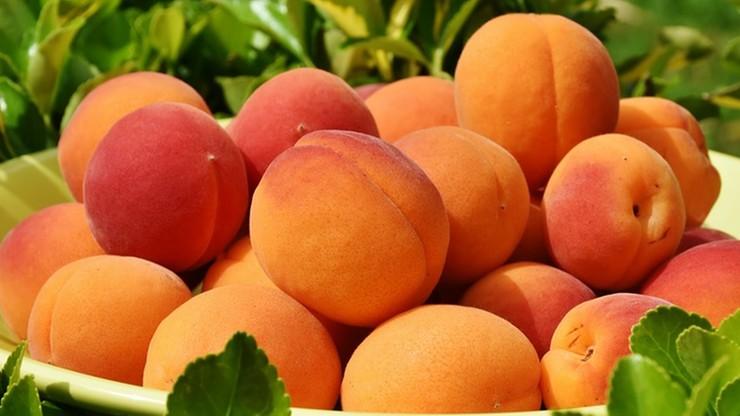 Owoce słodsze i bogate w antyoksydanty. Pozytywny aspekt upałów we Włoszech
