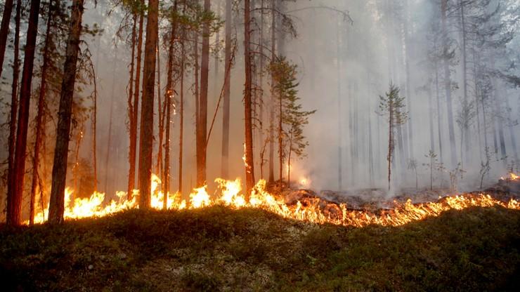 Ponad 30 stopni za kołem podbiegunowym. Skandynawia walczy z pożarami i suszą