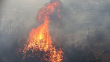 Katastrofalne pożary lasów szaleją w Chile. Wzrósł bilans ofiar