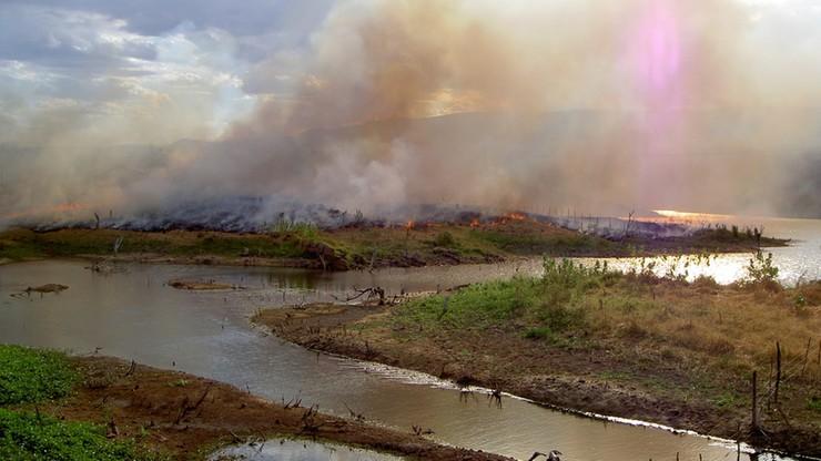 Rząd Brazylii udostępni plantatorom chronione obszary puszczy amazońskiej