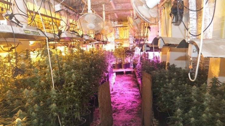 Marihuana dojrzewała w podziemnej hali. Miał jej nikt nie zauważyć