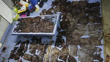 """Wieloryb miał w żołądku 8 kg śmieci. Nie przeżył. """"Niedługo nasze oceany udławią się plastikiem"""""""