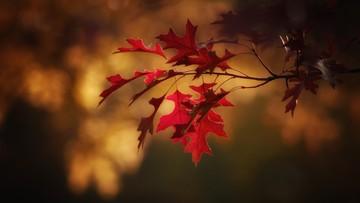 Rozpoczyna się astronomiczna jesień. Początek dziś wieczorem