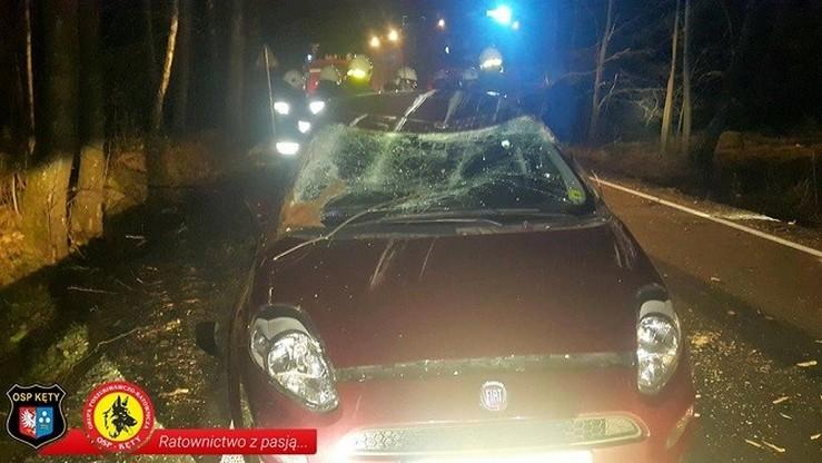 Drzewo upadło na maskę Fiata Punto z dwiema osobami w środku.