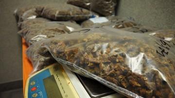 Policja przejęła 10 kg marihuany. Narkotyki przewoził Albańczyk