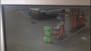 Kierowca busa przejechał leżącego psa. Wcześniej koło niego przechodził