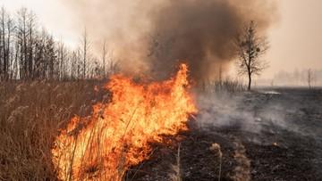 Biebrzański Park Narodowy wciąż płonie. Ministrowie wysyłają śmigłowce do akcji gaśniczej
