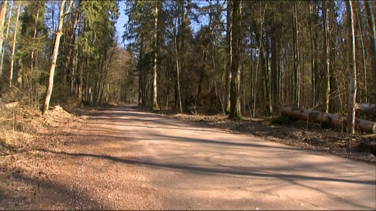 Śledztwo ws. rozwoju kornika w Puszczy Białowieskiej