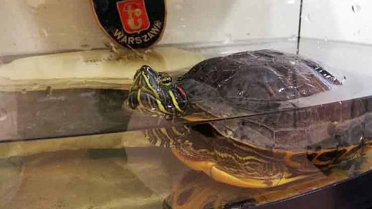 Warszawa: poszedł na ryby, wrócił z żółwiem