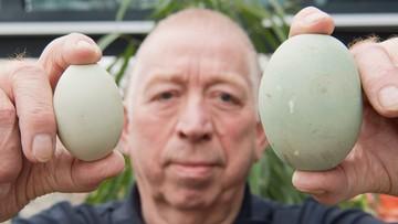 Niemcy: kura zniosła ogromne jajko
