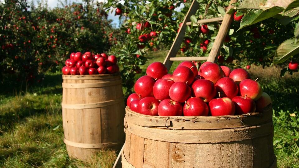 Co wspólnego mają ze sobą włoskie proseccoi grójeckie jabłka?
