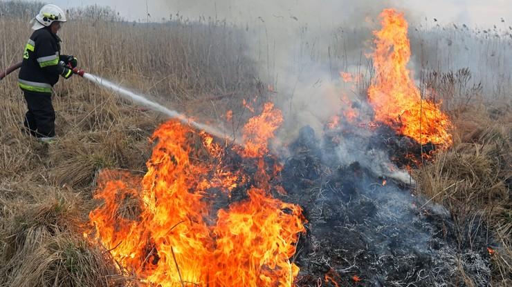 Pożar największego parku narodowego w Polsce