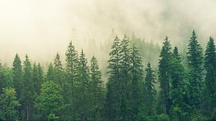 Tylko 3% ziemskich ekosystemów pozostało nienaruszonych przez człowieka