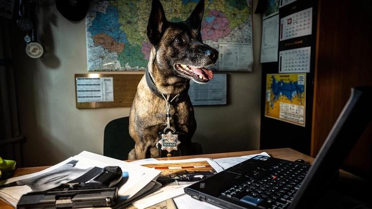 Policyjne psy i konie pójdą na emeryturę. Dzienna stawka zależna od wagi zwierzęcia
