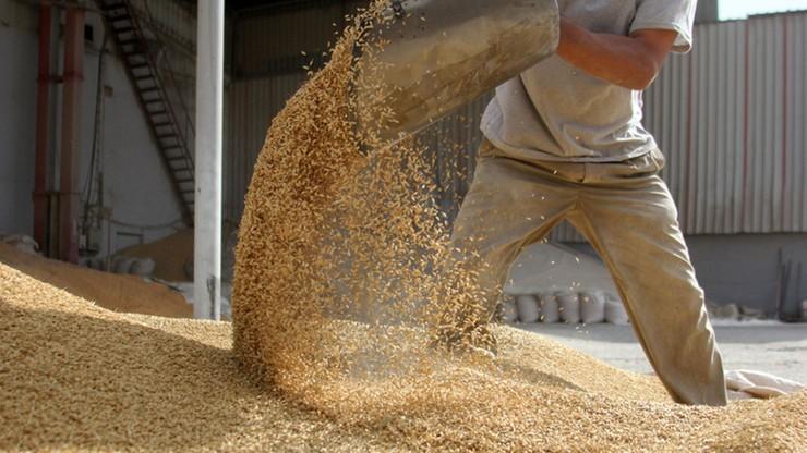 Parlament Europejski odrzucił projekt ws. zakazu importu GMO
