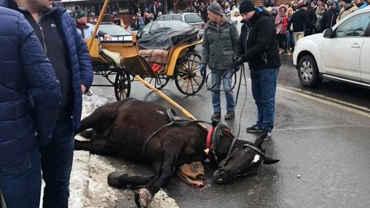 Spłoszony koń pędził bez woźnicy przez Krupówki. Przewrócił 10-letniego chłopca
