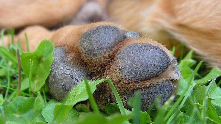 Pies przywiązany do drzewa z łapami związanymi taśmą. Trwają poszukiwania sprawcy