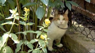 """Rybki zjedzone przez koty. Sąd uznał ich właściciela za winnego. """"Będę walczył do końca"""""""