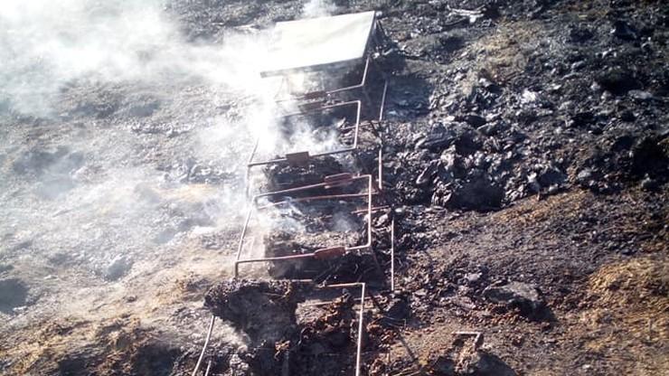 W ulach spłonęło ponad milion pszczół. Powód: ktoś wypalał trawy