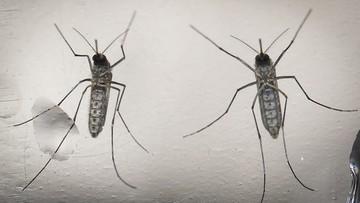 WHO wyda 56 mln dolarów na zwalczenie wirusa Zika