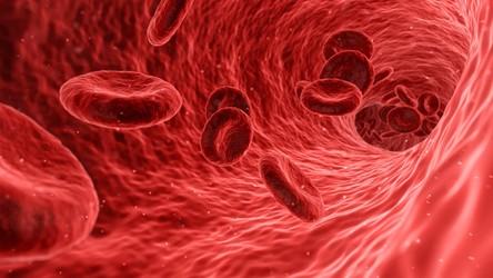 Naukowcy znaleźli metodę ograniczającą ryzyko odrzucenia przeszczepu szpiku