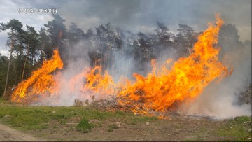 Ogień sięgał czubków drzew. Jest nagroda za wskazanie podpalacza lasów
