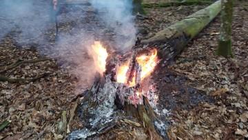 """Ktoś podpala suche drzewa w Puszczy Białowieskiej. """"Skrajna nieodpowiedzialność i bezmyślność"""""""