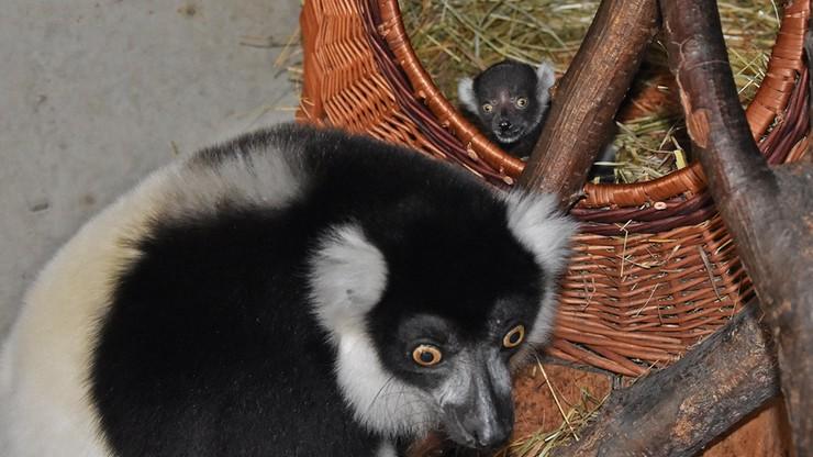 """Niespodziewane narodziny w zamojskim zoo. """"To prawdopodobnie pierwszy taki przypadek"""""""