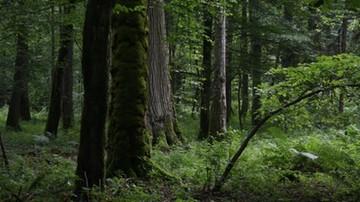 Dziekani wydziałów przyrodniczych w obronie Puszczy i rzek