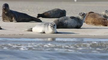 Coroczna rzeź fok w Kanadzie. Protest obrońców praw zwierząt