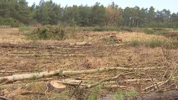 Dwie osoby z zarzutami za wycięcie lasu w Łebie. Grozi im do 5 lat pozbawienia wolności