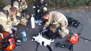 """Strażacy uratowali koty z pożaru. """"Dla nas każde serce bije tak samo"""""""