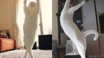 Kot, który jest mistrzem baletu. Kolejny dowód, że internet kocha koty