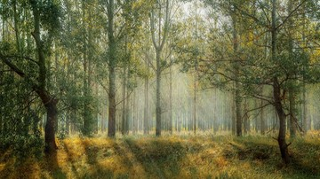 Polska jeszcze w tym roku może ratyfikować paryskie porozumienie klimatyczne