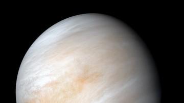 Ślady życia na Wenus? Przełomowe wyniki badań