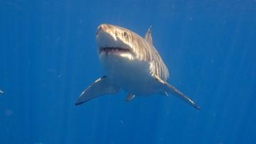 Atak rekina przy plaży. Nie żyje surfer