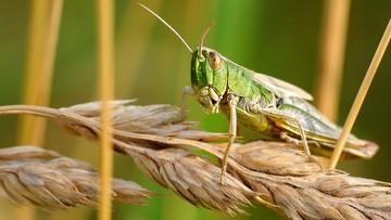 Dramatyczne w skutkach wymieranie owadów - alarmuje niemiecka minister środowiska