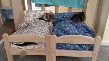IKEA podarowała schronisku dla kotów łóżeczka dla lalek. Rozczulające zdjęcia