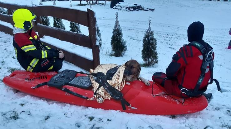 Załamał się pod nim lód. Strażacy uratowali topiącego się psa