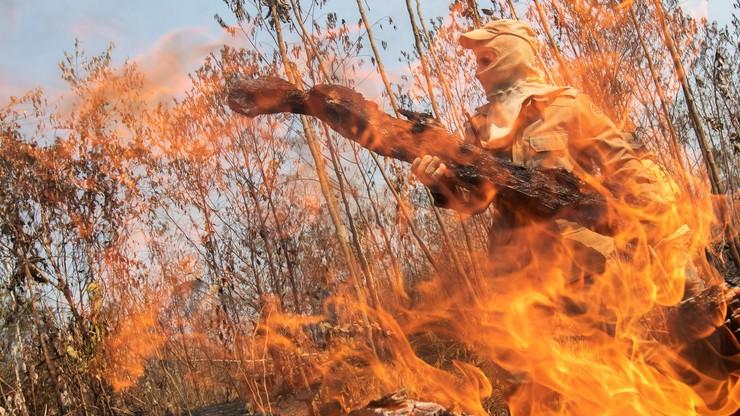 Olbrzymie pożary lasów w Kolumbii. Spłonęło ponad 100 tys. ha. To były podpalenia